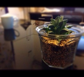 new-planter